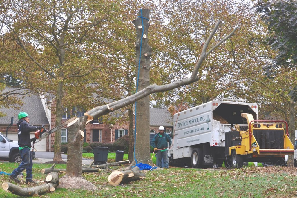 Read This Before Hiring a Tree Service Company